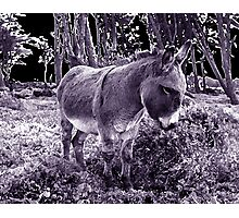little donkey ... little donkey ... there's a star ahead! Photographic Print