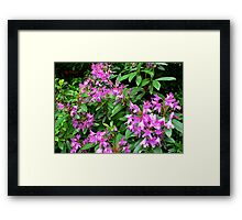 Bring back the Summer Framed Print