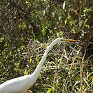 Great Egret by H & B Wildlife  Nature Photography