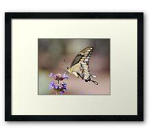 Butterfly Study  Framed Print
