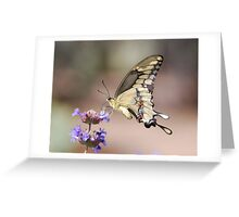 Butterfly Study  Greeting Card