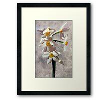 Spring on a Stalk Framed Print