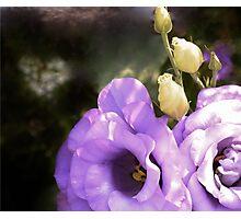 Mock Rose Photographic Print