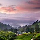 Morning @ The Tea Farm by Steven  Siow