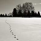 Follow the Tracks by Brian Gaynor
