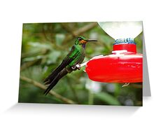 Green-crowned Brilliant Hummer at Feeder Greeting Card