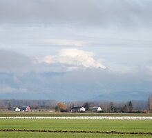 Skagit Valley by Edith Farrell