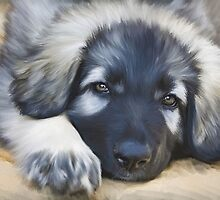 Shiloh Shepherd.. by Cazzie Cathcart