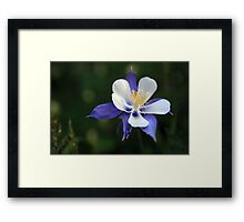 Rocky Mountain Columbine Framed Print