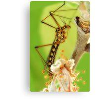 strange insect Canvas Print