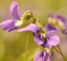 Playful Wild Violets Sticker