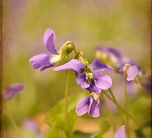 Playful Wild Violets by Lois  Bryan