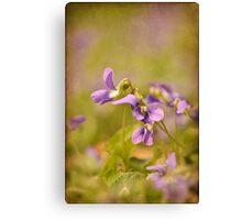 Playful Wild Violets Canvas Print