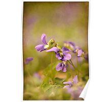 Playful Wild Violets Poster