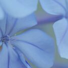 double bleu 1 by picketty