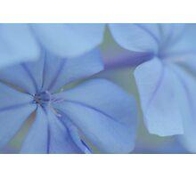 double bleu 1 Photographic Print