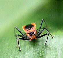 Orange Crawler by Selina Tour