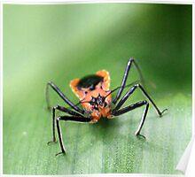 Orange Crawler Poster