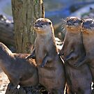 A Bevy of Otters by RedHillDigital