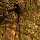 Ancient tree bark close up by peteton