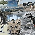 Montage - Antarctica by cascoly
