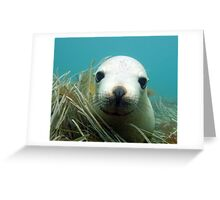 Australian Sea Lion Greeting Card