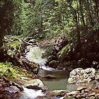 A Creek along the track by myraj
