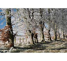 Frosty beeches 2 Photographic Print