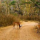 Impala's on the road by steppeland