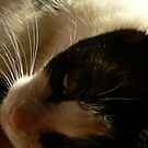 Whiskers by aratma