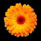 Marigold Flower Leggings by fantasytripp