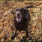 Lexie in the Fall leaves by tawaslake