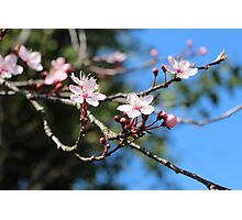 Spring is in the air! Photographic Print