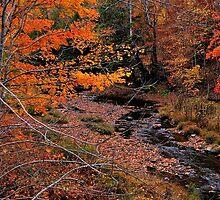 Winding Brook by Kathleen   Sartoris