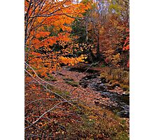 Winding Brook Photographic Print