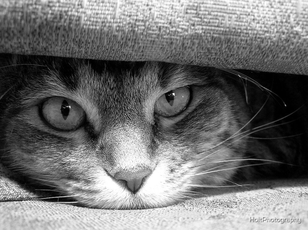 Can't Hide Anywhere by HoltPhotography