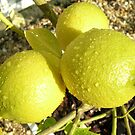 Lemons by Gabrielle Battersby