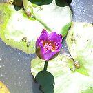 Floating Bloom by ShadowDancer