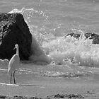 Crashing Water. by clentz