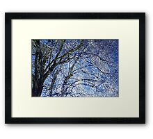 Ice Storm at Maple Framed Print