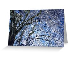 Ice Storm at Maple Greeting Card
