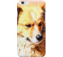 Pooch on the patio iPhone Case/Skin