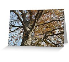 A Fabulous Old Tree Greeting Card