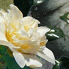 Modesty- golden yellow camellia by LisaBeth