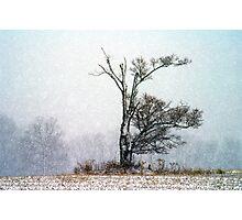 Thanksgiving Journey Photographic Print