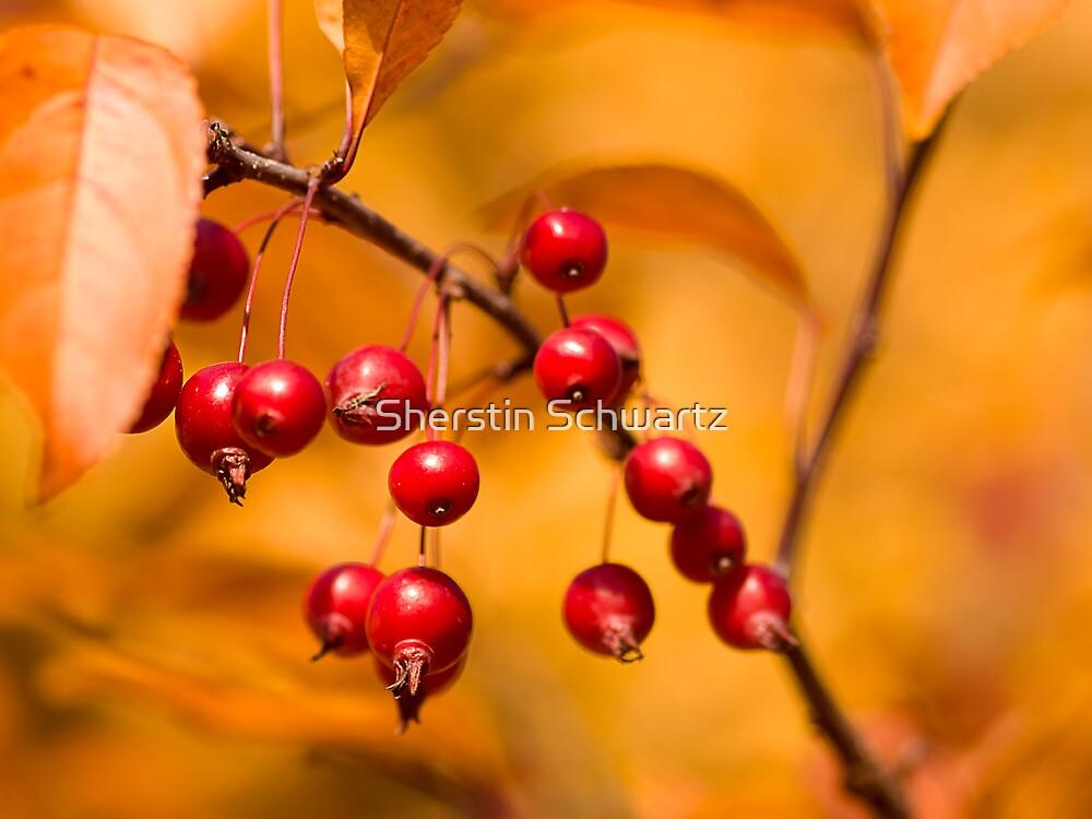 Autumn. by Sherstin Schwartz