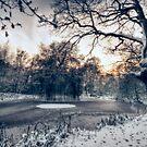 Winter Pond by Nigel Bangert