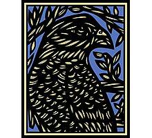 Bevilaqua Eagle Hawk Blue Black Photographic Print