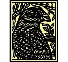 Krishun Eagle Hawk Green Black Photographic Print