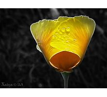 yellow amd orange Photographic Print